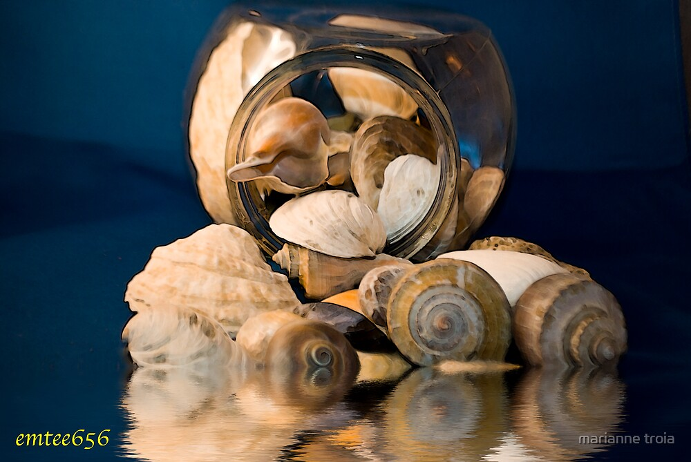 sea shells by marianne troia