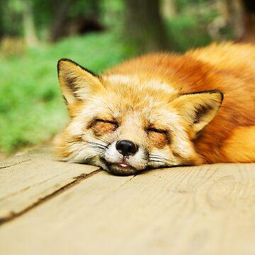 Sleeping Fox by Xymota
