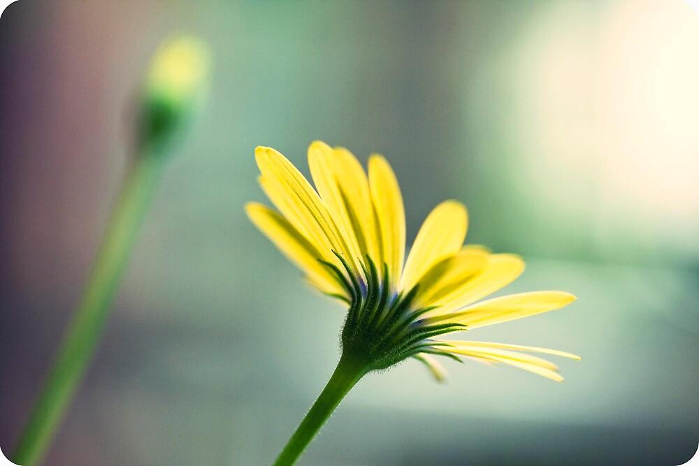flowers by daggie