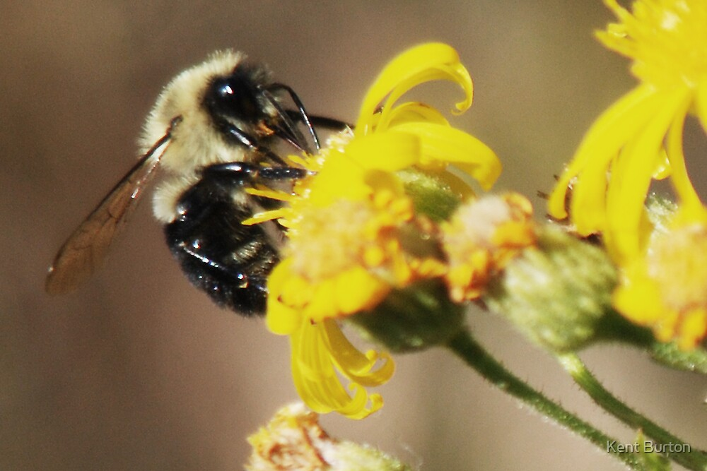My work is never done by Kent Burton