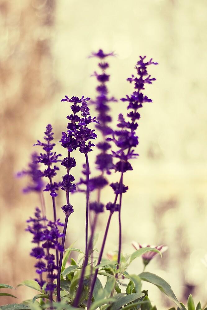 lavender by daggie