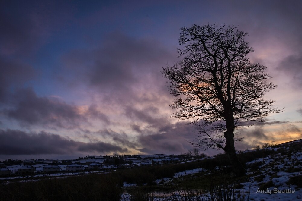 Sunset Sycamore by Andy Beattie