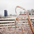 Frozen Farm by Brent Craft