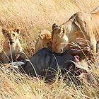 Lioness  & her Cubs at a Wildebeest Kill, Maasai Mara, Kenya by Carole-Anne