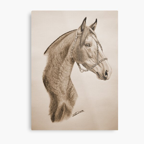 """Argentinian Beauty"" - Criollo mare - Sepia Metal Print"