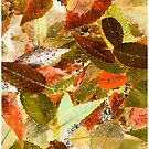 Fallen Leaves Chill In The Air #1 by Mark Ross