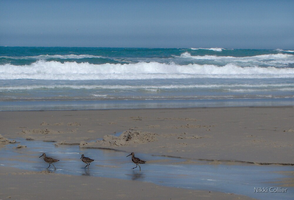 Beach Birdies by Nikki Collier