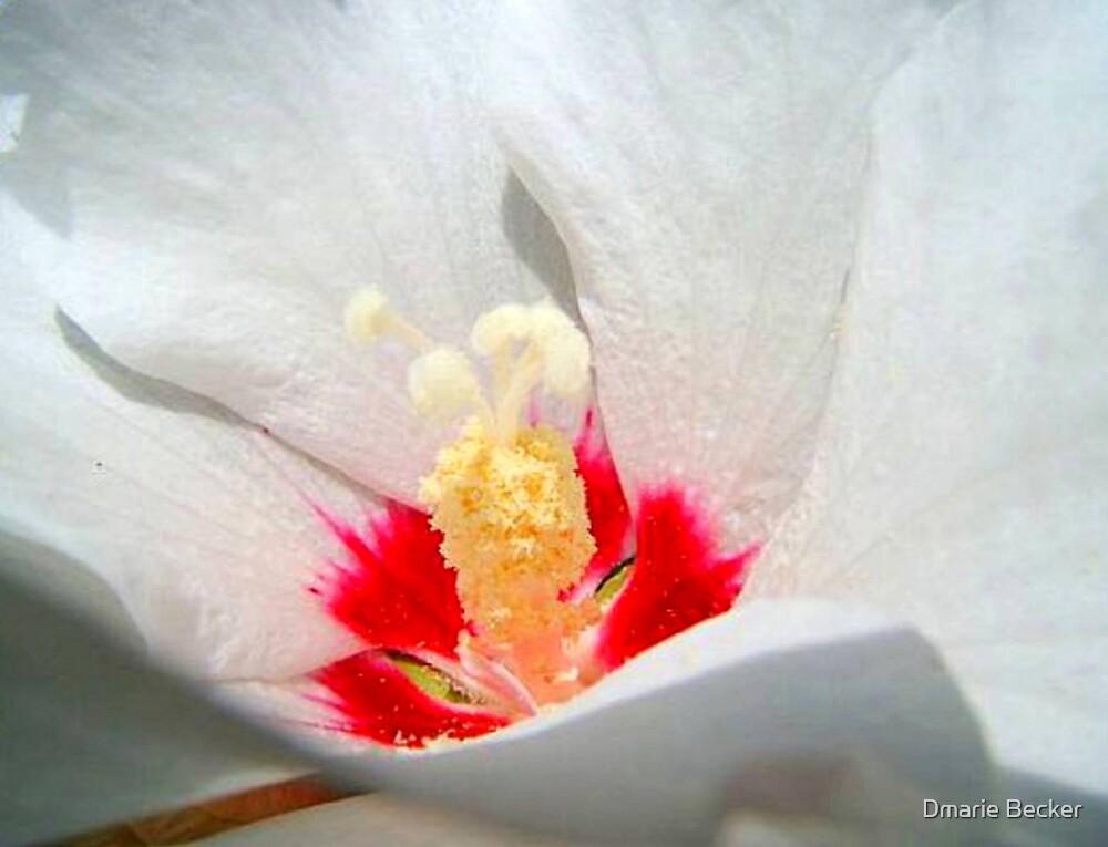 Beauty by Dmarie Becker