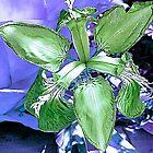Inverted Iris by Margaret Stevens