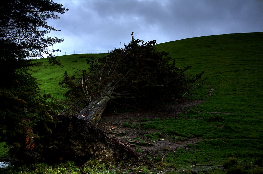Uprooted by Peter Hancock