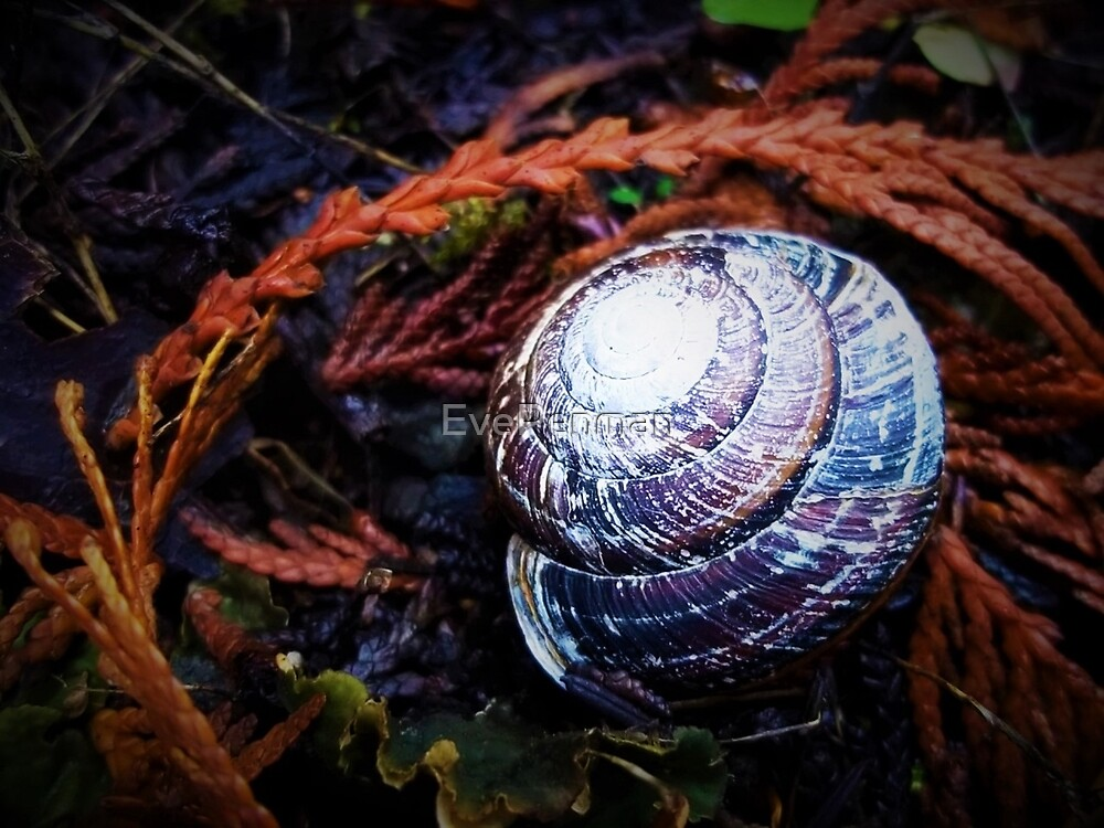 PNW Snail Shell by EvePenman