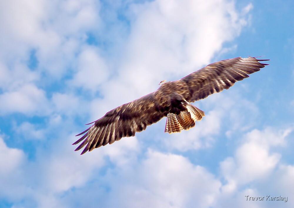 Flight by Trevor Kersley