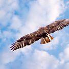Flight by Trevor Kersley