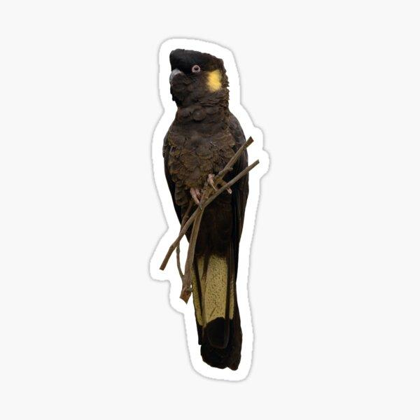 Yellow-tailed Black Cockatoo Sticker