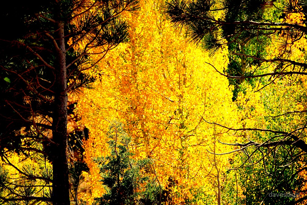 *AUTUMNS GOLDEN FIRE* by davesdigis