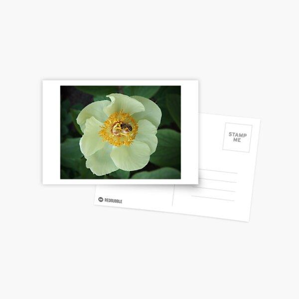 Bee on Flower Postcard