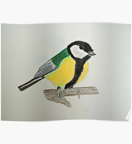 Great Tit Coloured Pencil Drawing Poster