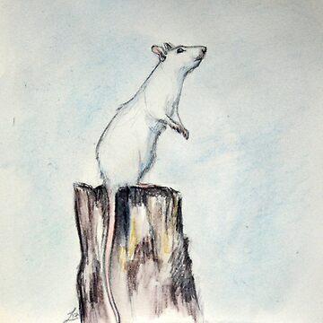 White rat by LauraMSS