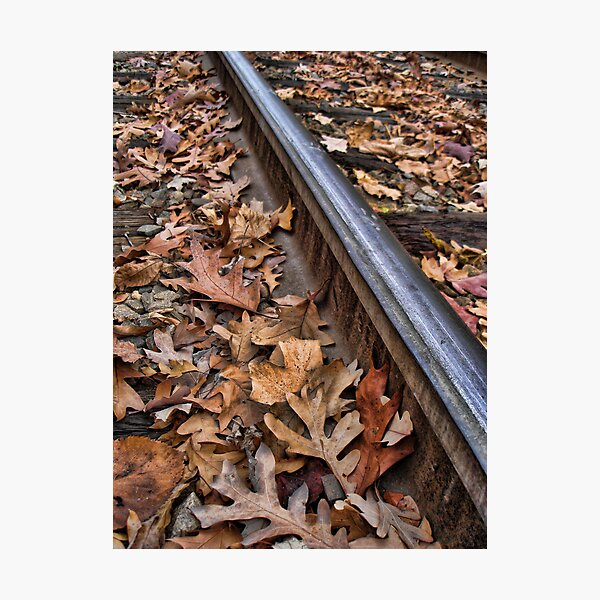 The Tracks of Fall Photographic Print