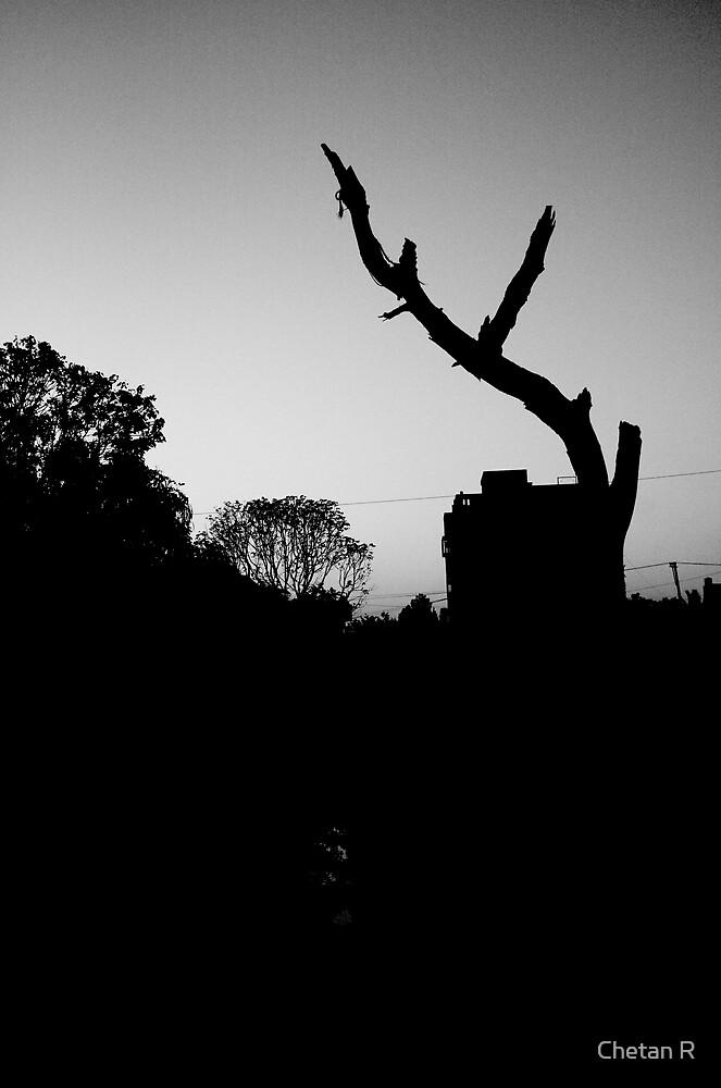 Broken Tree by Chetan R