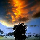 Flame Tree 1 by Andrew Smyth