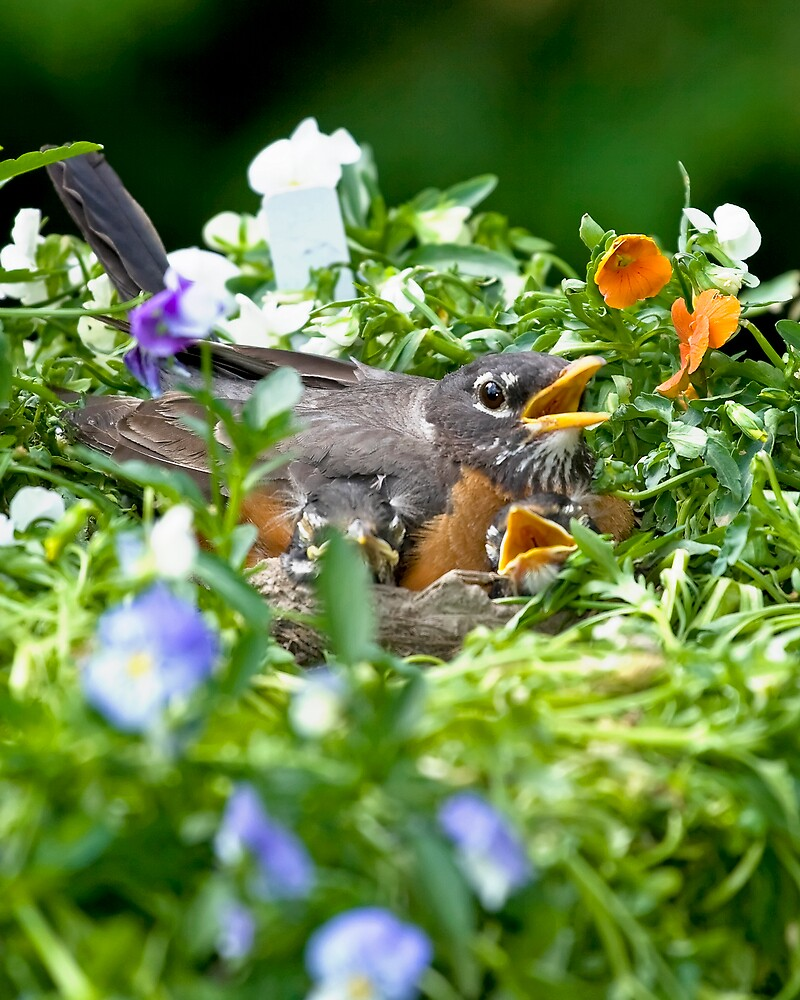 Robin Family Flowers by StephenCoyle