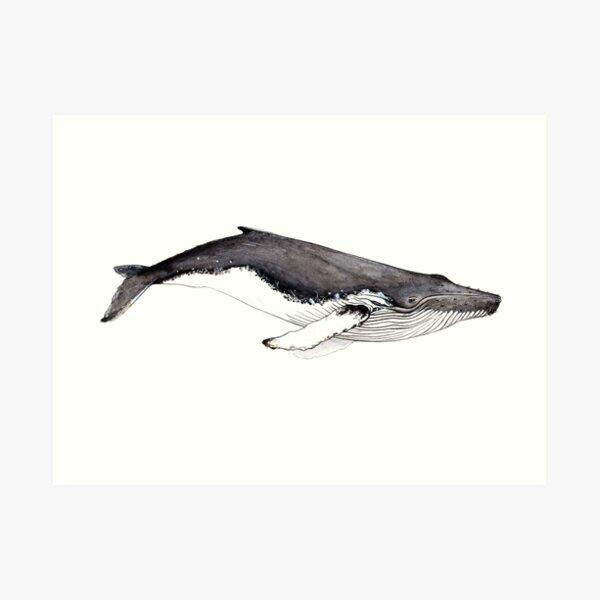 Buckelwal (Megaptera novaeangliae) Kunstdruck
