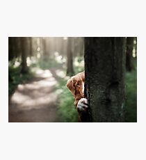 cute dog hiding behind a tree. Travel with a pet Photographic Print