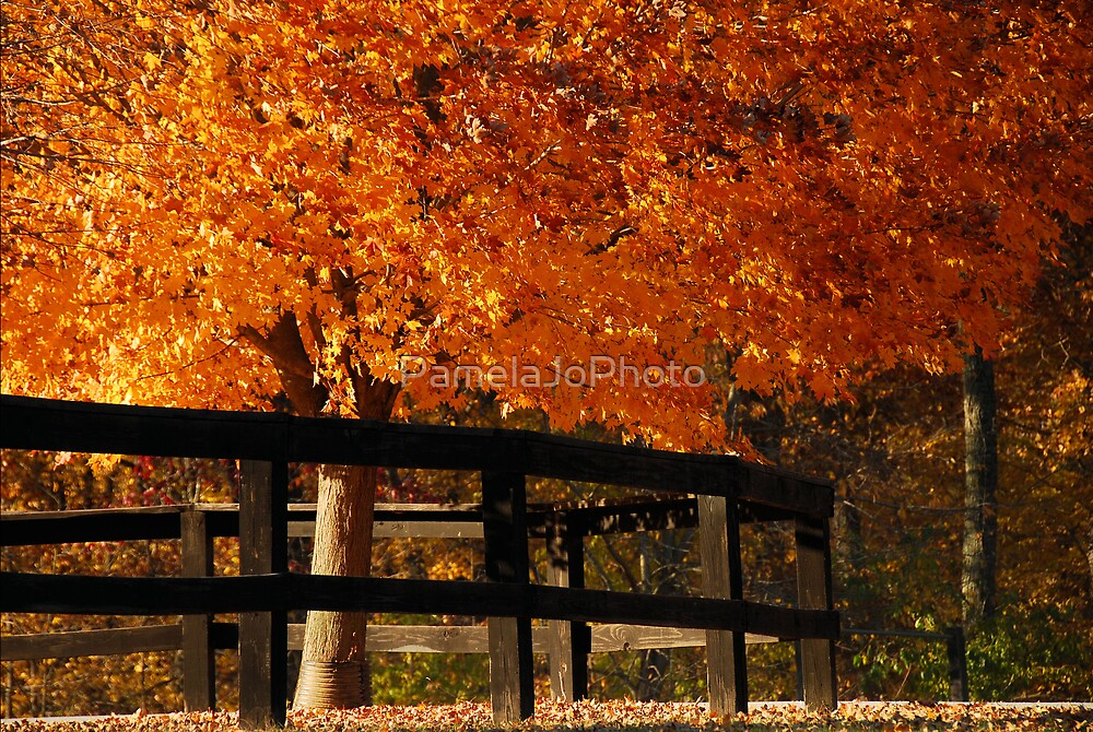 Autumn On Fire by PamelaJoPhoto