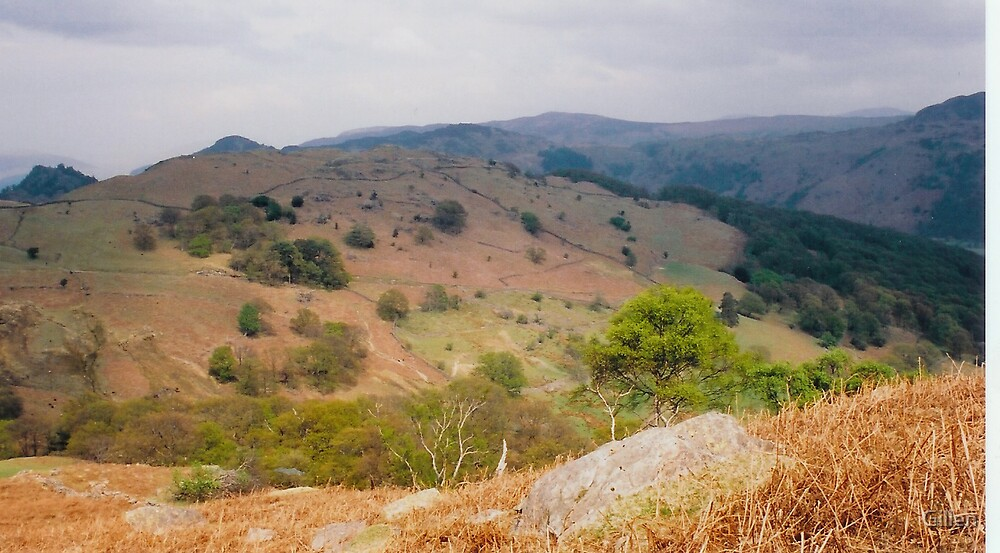Lakeland Hill side view by Gillen