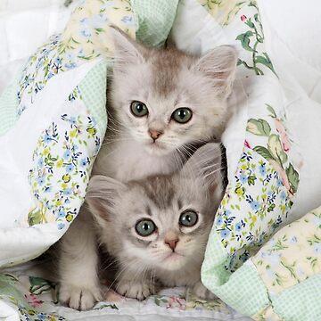 Two cute Tiffanie kittens by ArdeaOnline