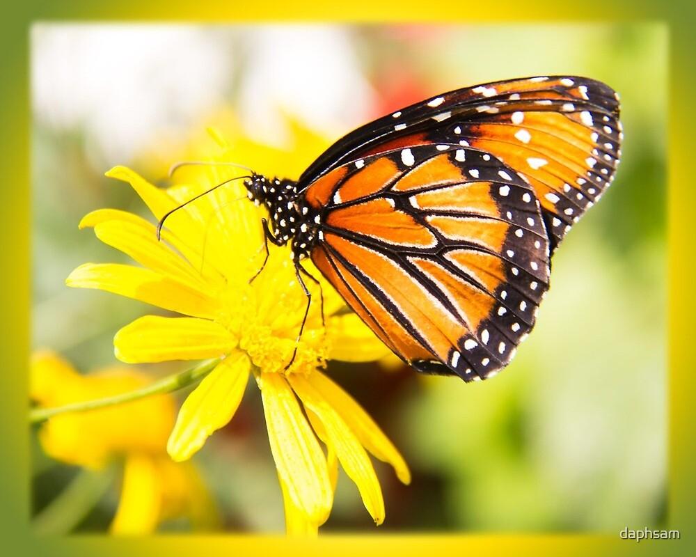 Monarch Orange Butterfly by daphsam