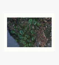 Emerging Sea Anenomies Art Print