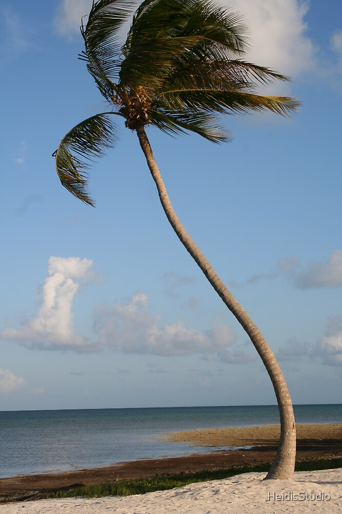 Palm Tree by HeidisStudio