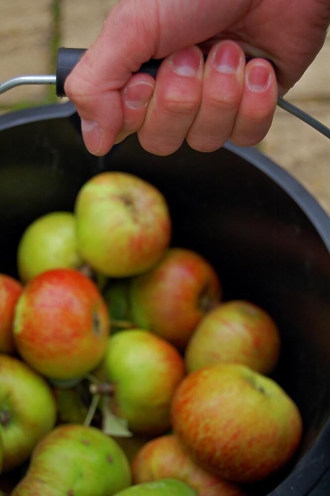 Apple harvest by Alison Johnson