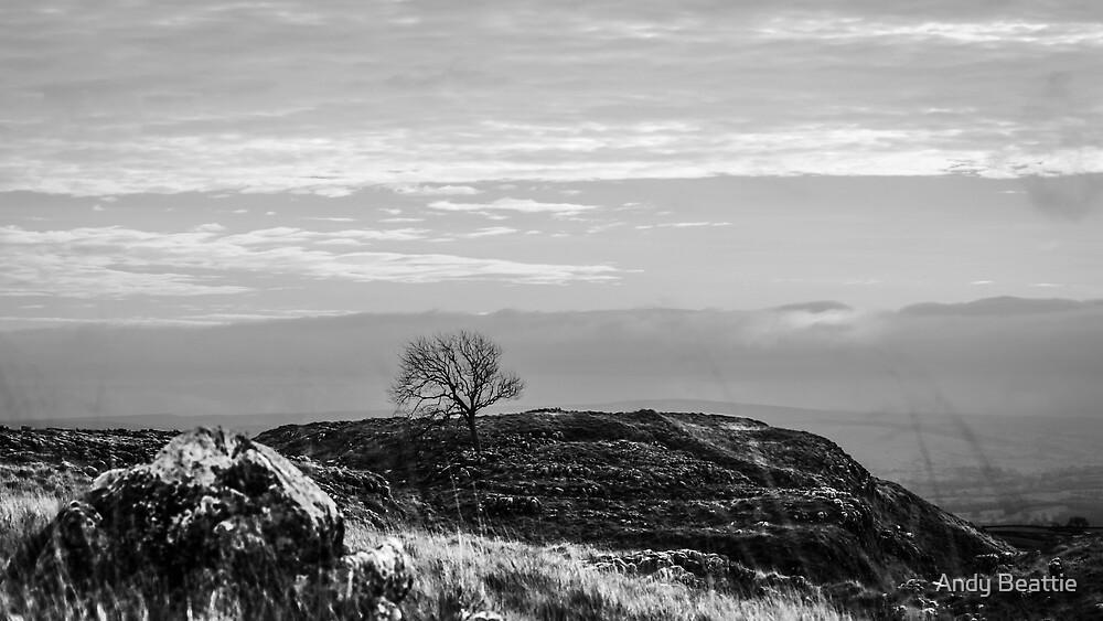 Lone Tree, Malham by Andy Beattie