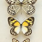 Butterflies Three by Alyson Fennell