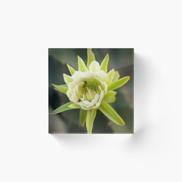 Princess of the Night - Bloom with Playful Bees Acrylic Block
