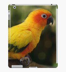 Sun Conure II iPad Case/Skin
