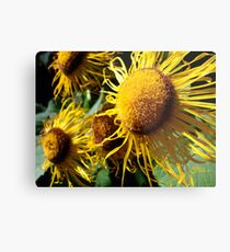 Sunflowers in Bloom - Shee Nature Photography Metal Print