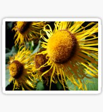 Sunflowers in Bloom - Shee Nature Photography Sticker