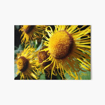 Sunflowers in Bloom - Shee Nature Photography Art Board Print