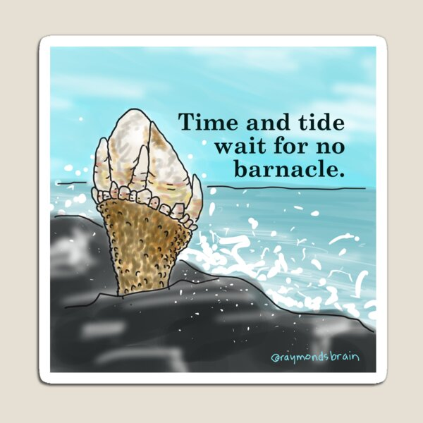 Time and Tide Wait for No Barnacle Magnet