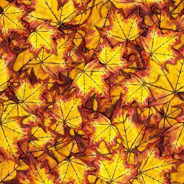 Autumn Feelings by AnnieKress