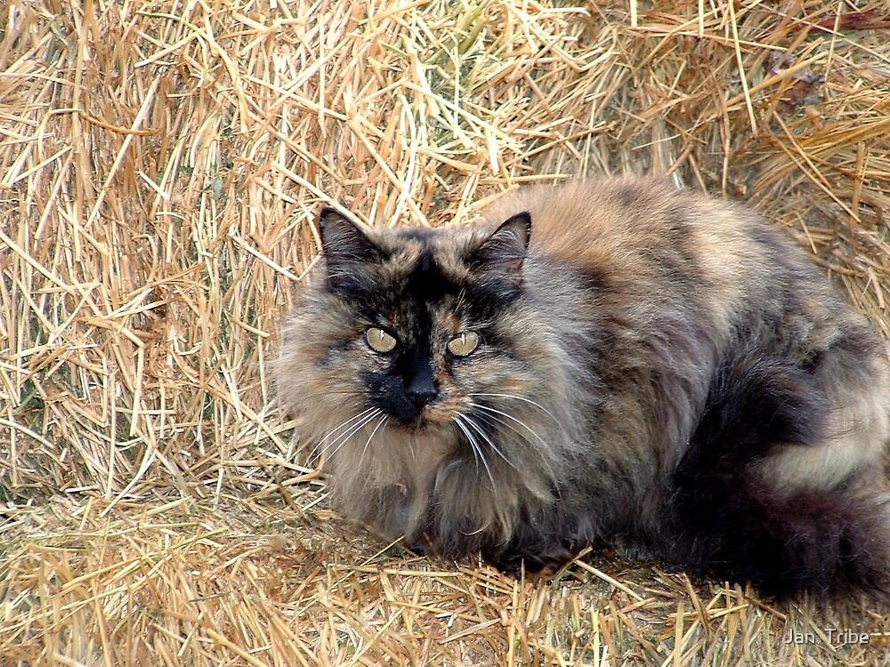 Kitty in November by Jan  Tribe