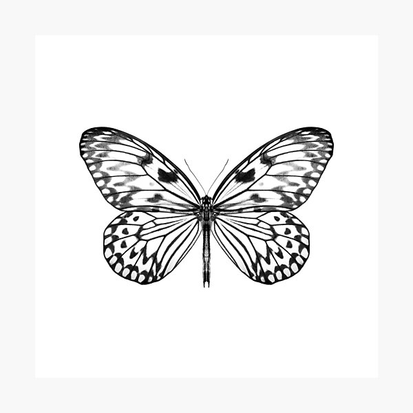 Mono Rice Paper Butterfly Photographic Print