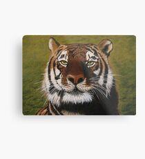 Bengal Tiger Metal Print