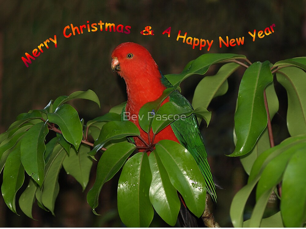 King Parrot in Umbrella Tree by Bev Pascoe