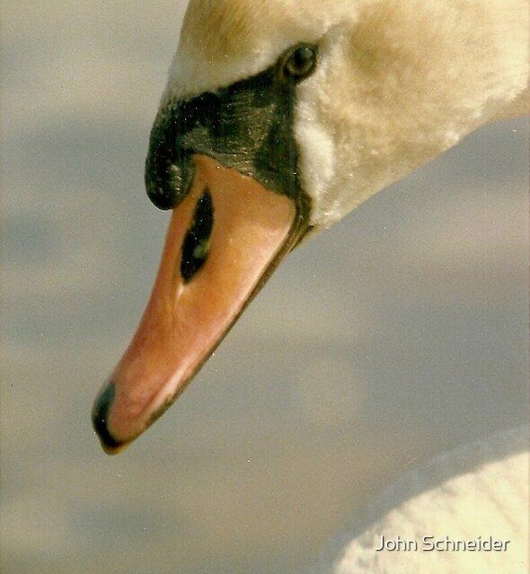Head Shot - Mute Swan by John Schneider