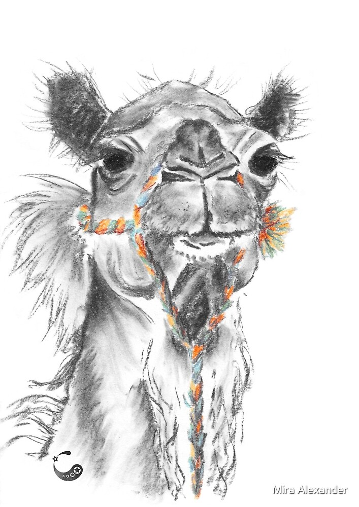 Dromedar - Charcoal Animals von Mira Alexander
